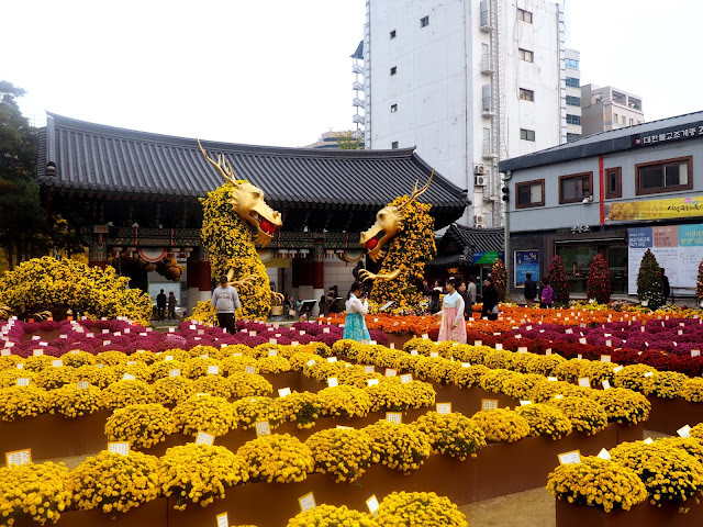 Jogyesa Temple Autumn Chrysanthemum Festival