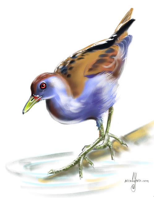 Little crake Bird painting by Artmagenta