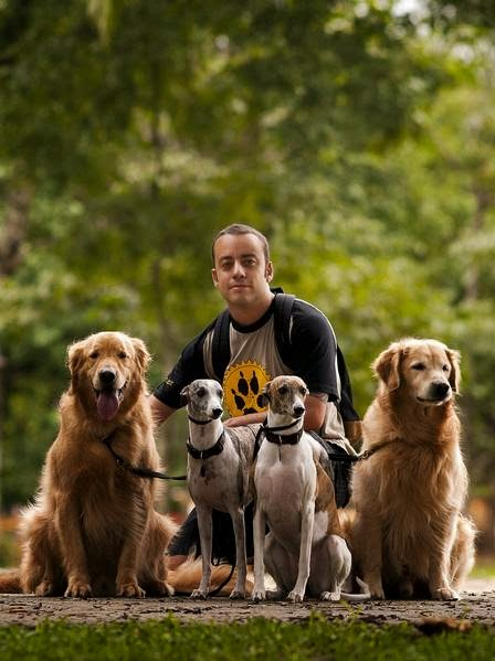 trabalhando cão de estimação sitter walker