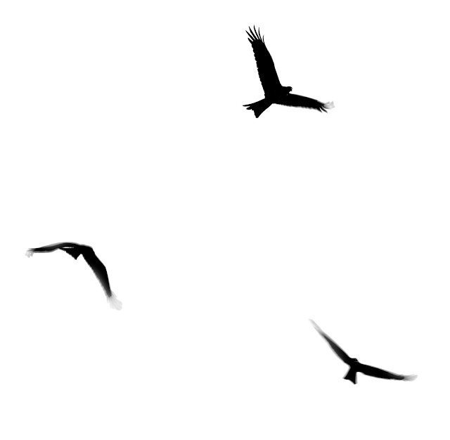 silhouetted flying birds