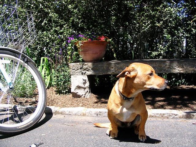 loco, tome un perro callejero y me marché