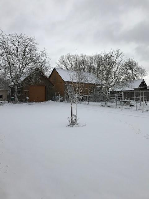 der Hausbaum im Schnee (c) by Joachim Wenk