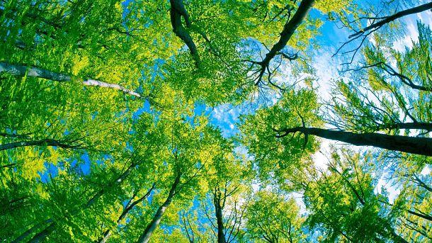 El espejo g tico un bosque silencioso elizabeth siddal for Lo espejo 0450 el bosque