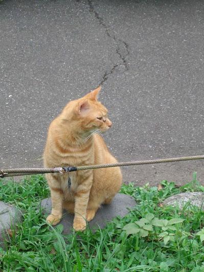 石の上に座っている茶色い野良猫