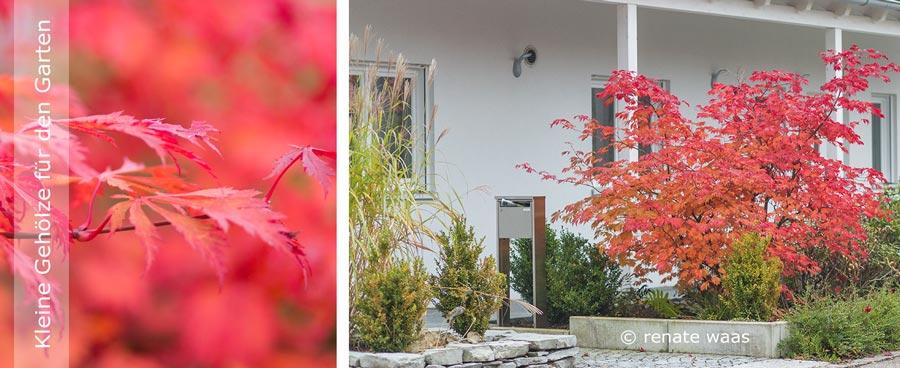 Gartenblog zu gartenplanung gartendesign und for Kleine straucher vorgarten