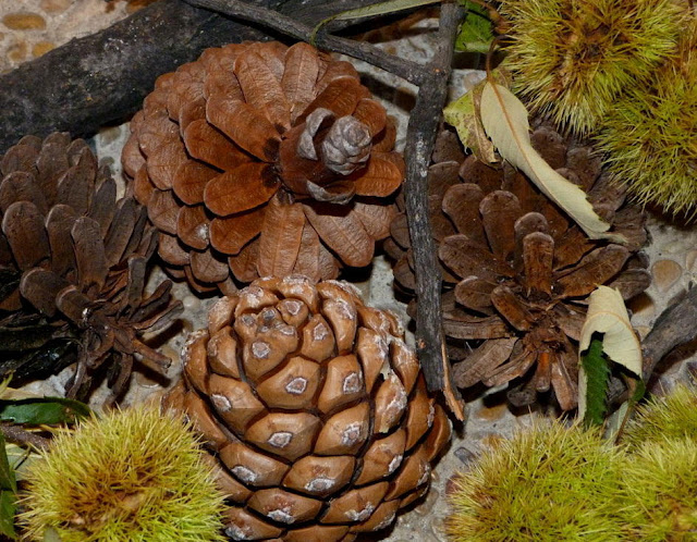 elementos-naturales-otoño
