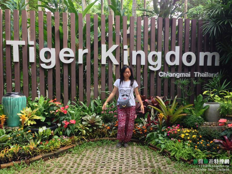 [泰國.清邁] Tiger Kingdom 與老虎的第一次近距離接觸