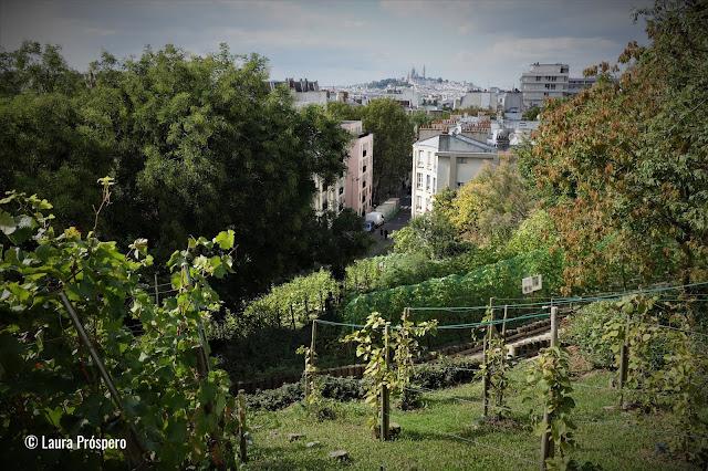 Vinhas, Butte Bergeyre - Paris © Laura Próspero