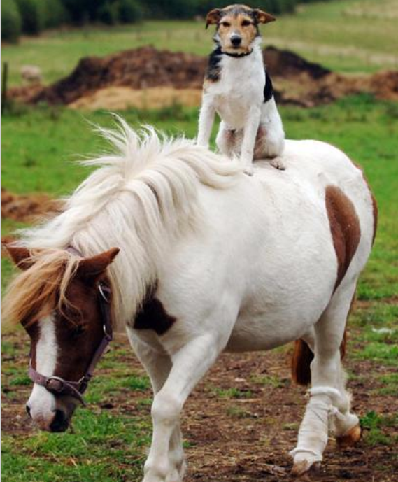 STORMBLOG: The Dog and Pony Show