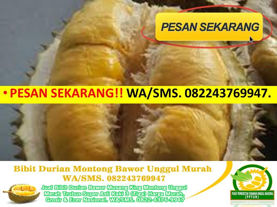 Jual Bibit Durian Musang King Jakarta Pusat