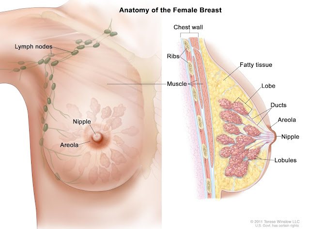 Breast Health Care The Basic Method For Women