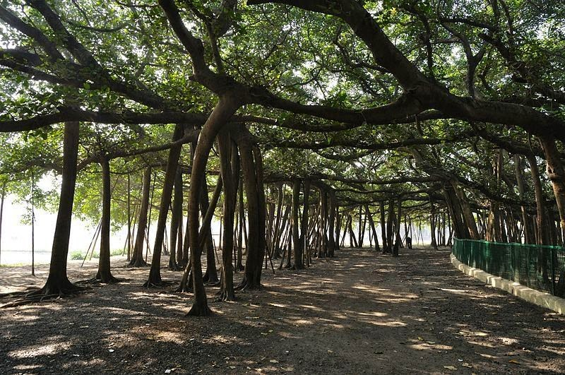 Great Banyan Tree area