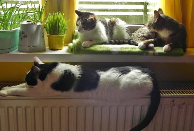 koty, zabawki dla kota, nietypowe półki na książki, jak zorganizować czas kotu, Brujita, na zamówienie
