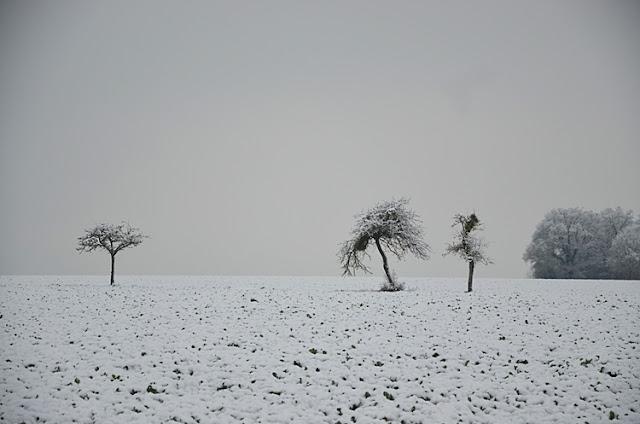 Neige Arbres Yonne Puisaye