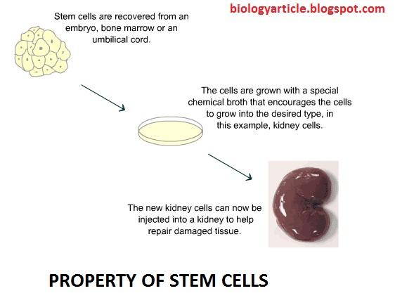 stem mobile phone posts just for biology