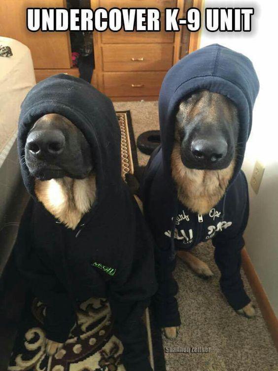 Undercover K-9 Unit