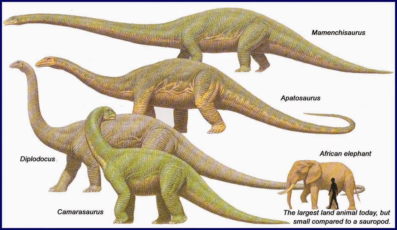 gambar dinosaur dan perbandingan saiznya dengan gajah dan manusia