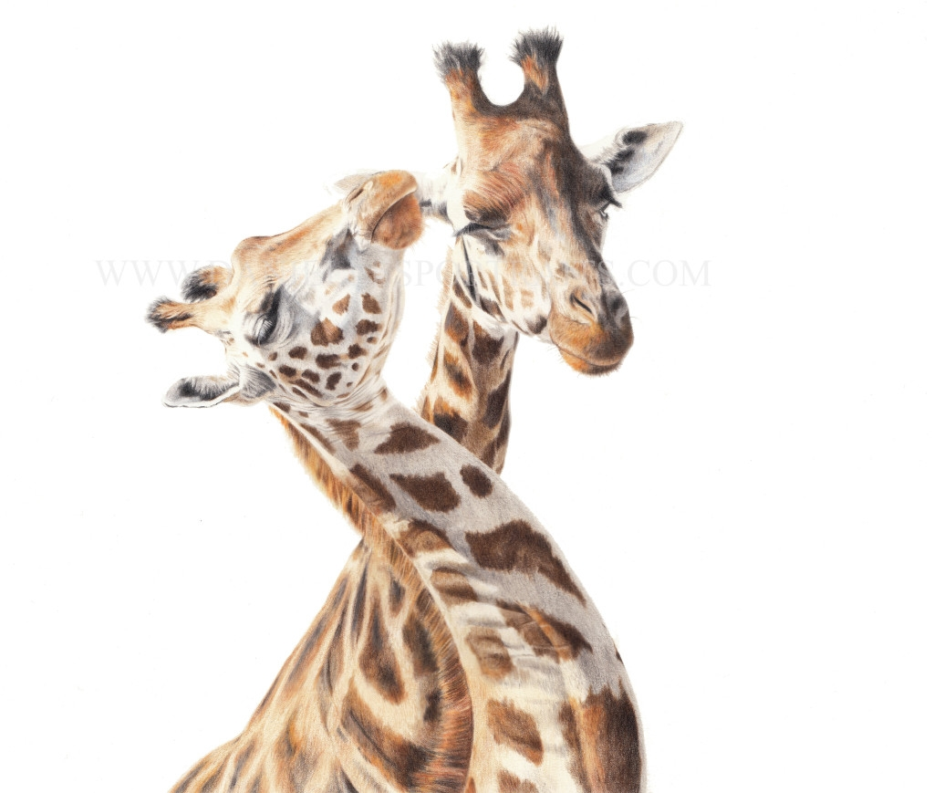 11-Giraffes-Danielle-Fisher-Realistic-Pet-and-Wildlife-Portraits-www-designstack-co