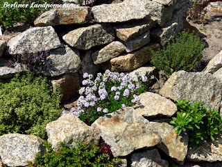Kräuterspirale bepflanzen - blühendes Bergbohnenkraut