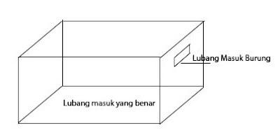 Ukuran Lubang Masuk Rumah Walet Yang Benar