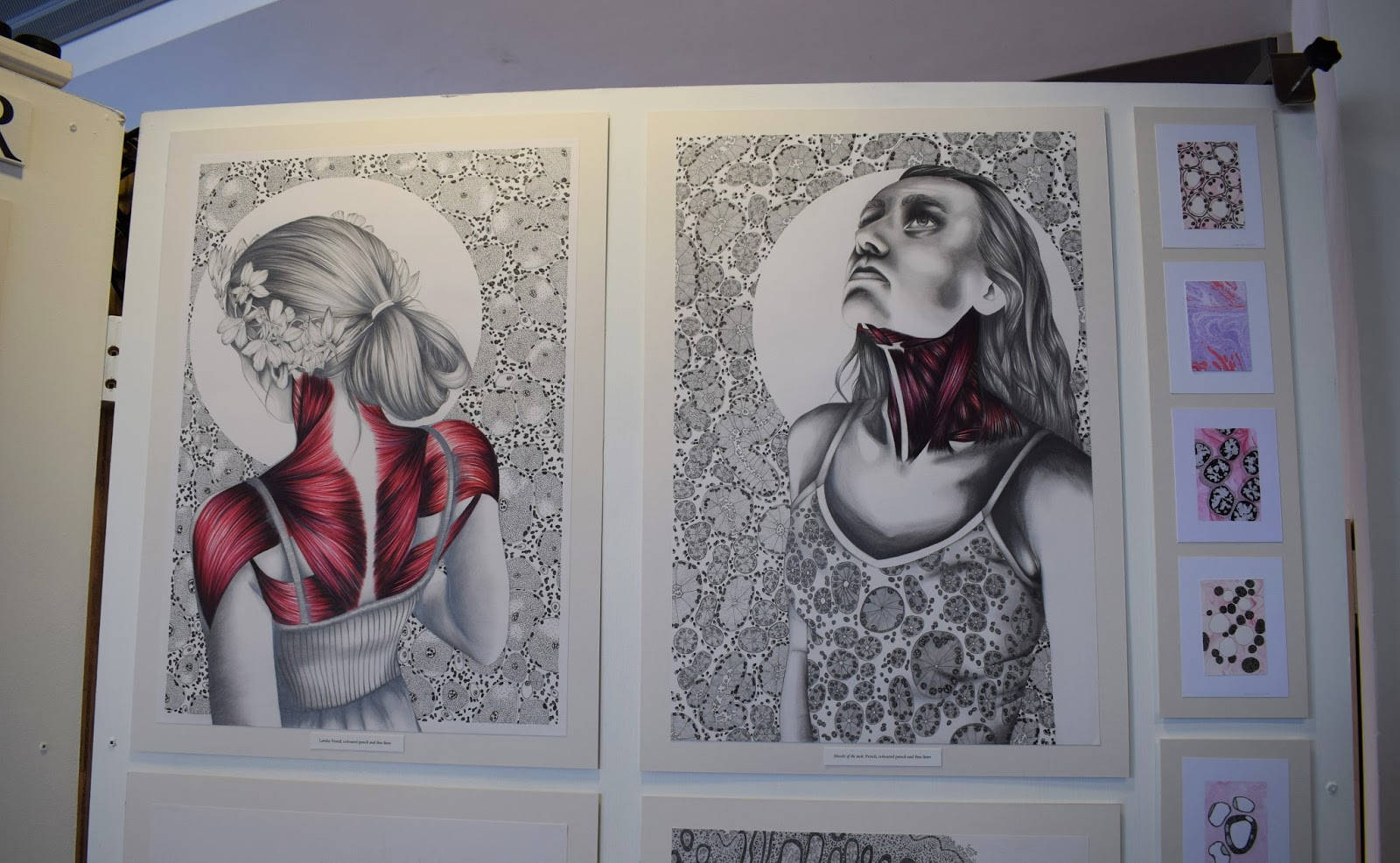 ECA degree show 2016, edinburgh college of art graduate,emerging designers UK, Amy Wedge, pretty anatomical illustration, modern medical illustration