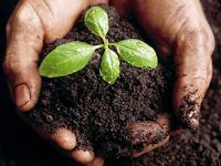 Inilah Jenis Tanah yang Baik untuk tanaman, Kamu harus tahu!