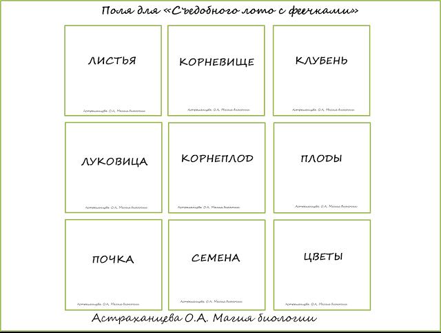 igry-v-botaniku-na-dache-dlya-detej-sedobnoe-loto-magiya-biologii