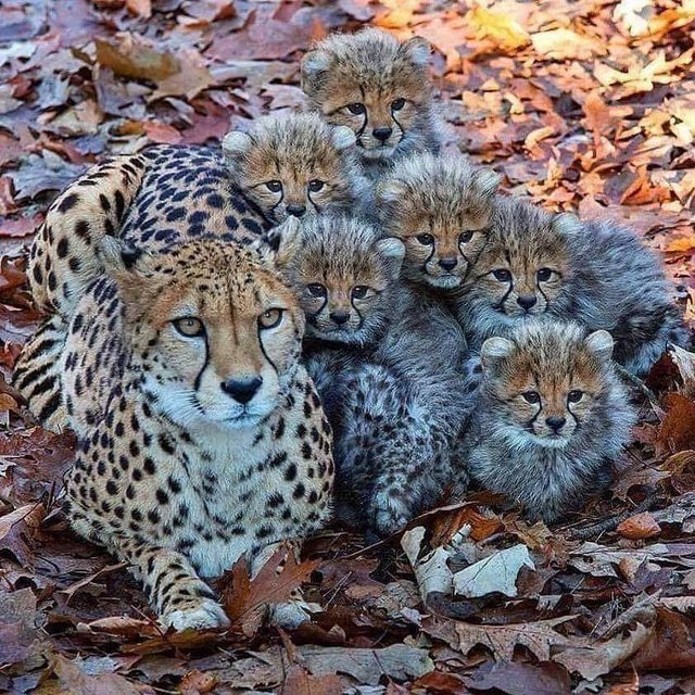 Beautiful Mom and her cubs