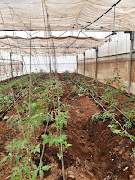 Vegetables grown in greenhouses on-site