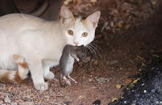kucing Membawakan hasil buruan