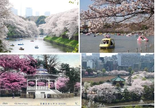 wisata tokyo, japan travel
