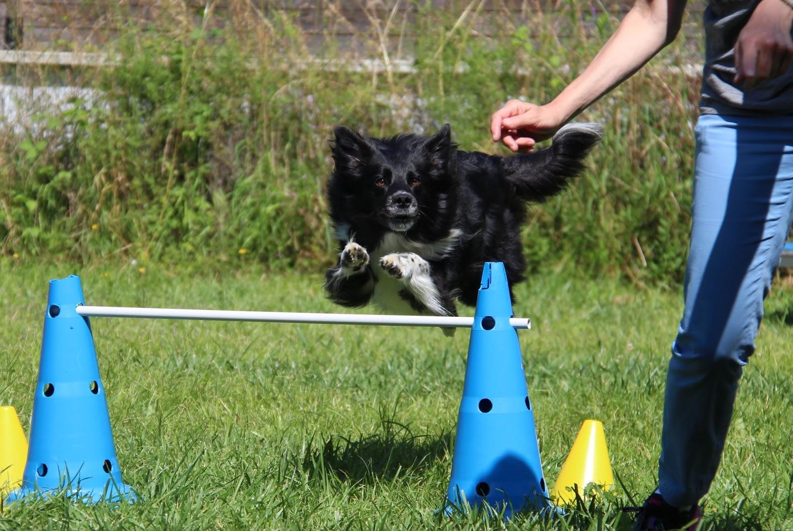 Educateur canin : Education canine pour chiots et chiens