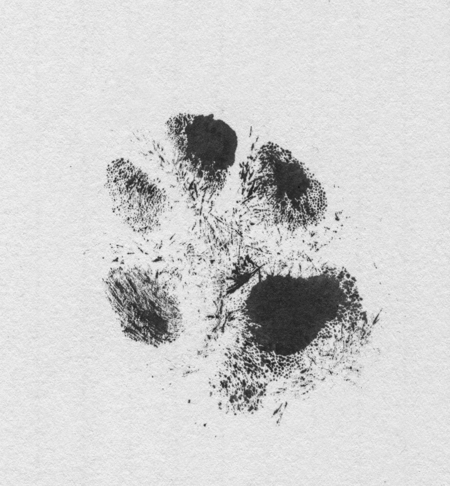 Midnight's paw print