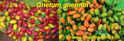 Anaemia use Gnetum gnemon
