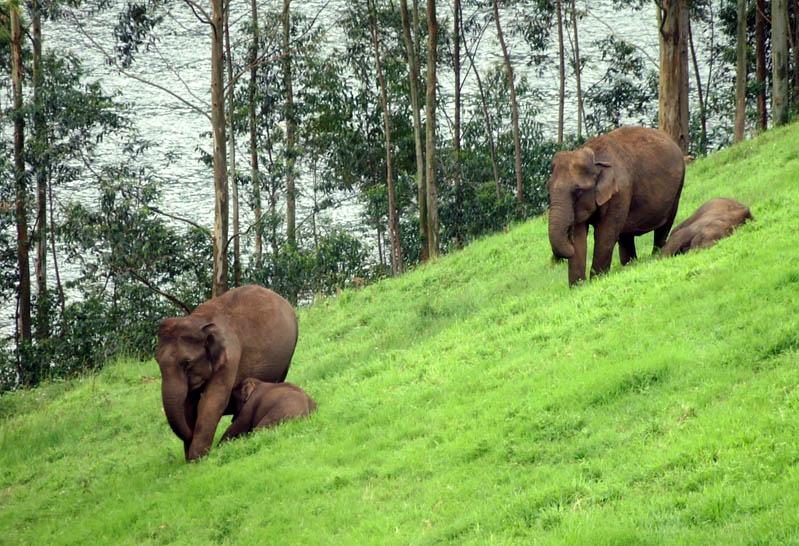 Kerala .... God's Own Country !!!: Munnar Hillstation