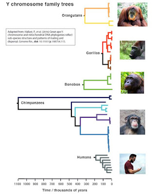 Ancient chimpanzee 'Adam' lived over one million years ago