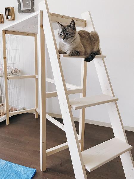 はしごのステップの上で香箱を組んでいる猫