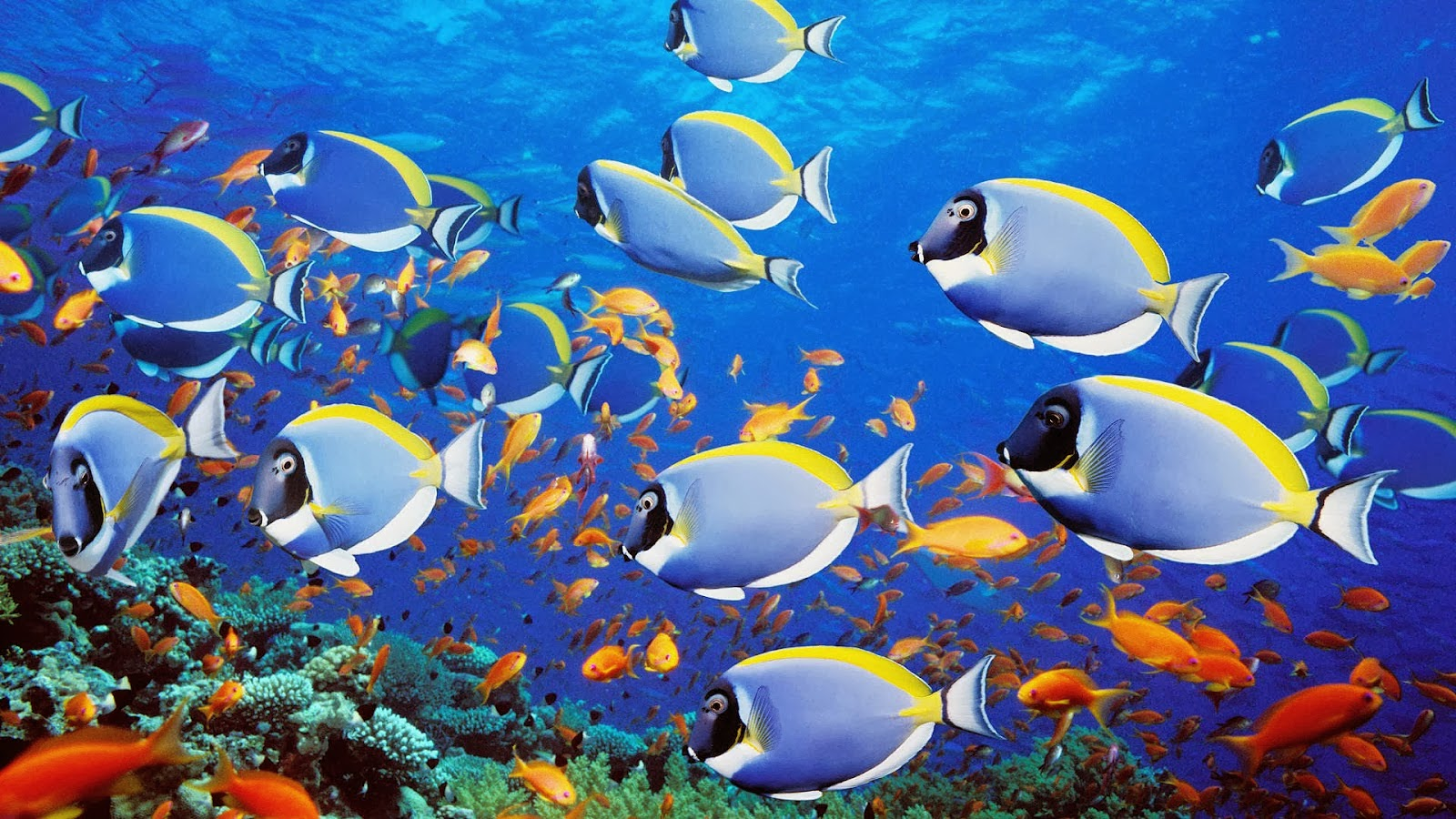Animated moving fish backgrounds - Moving animal wallpapers ...