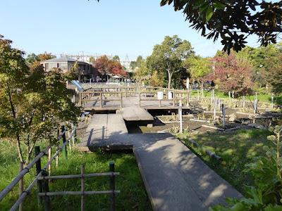 市民の森(鏡伝池緑地) 11月の花しょうぶ園