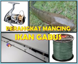 Tips Ampuh Mancing Ikan Gabus Dan Ikan Toman Aliems Journey