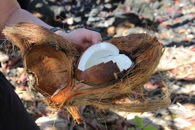 coconut on the Road to Hana