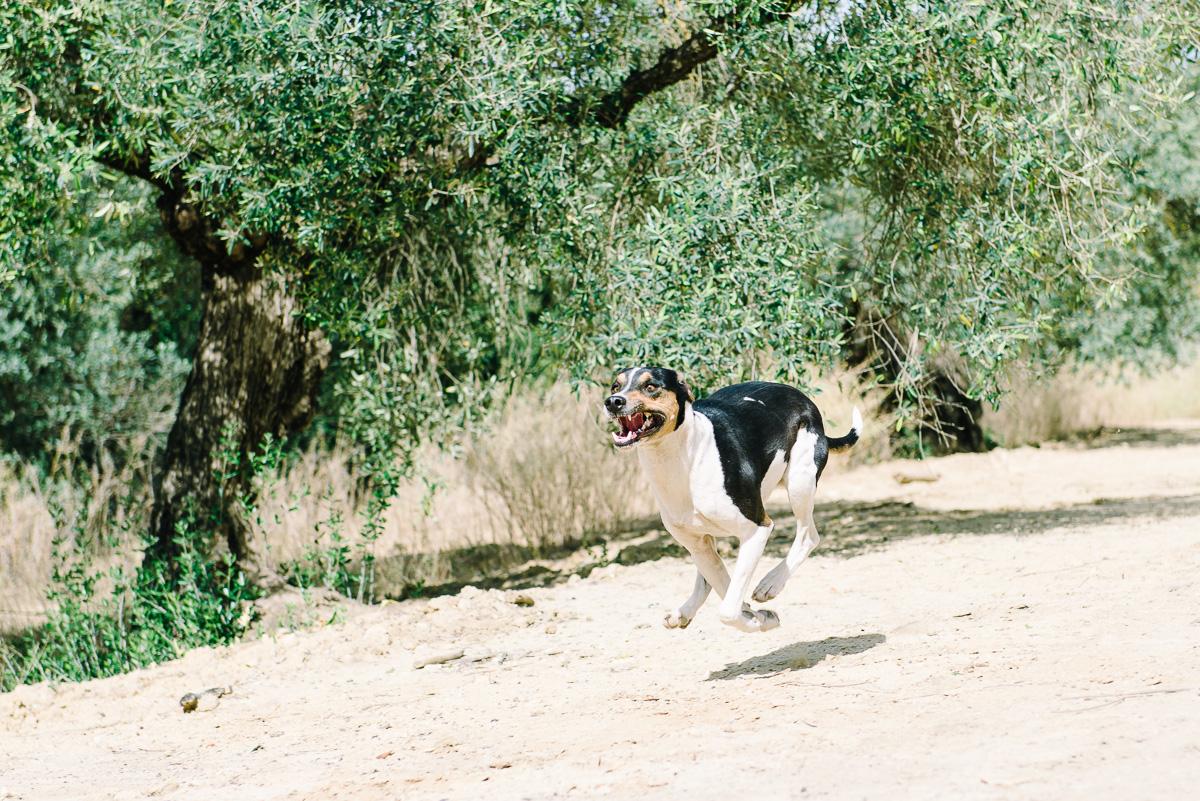 Como hacer fotos a un perro corriendo hacia la camara