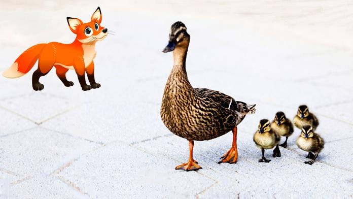Mamma anatra e la volpe