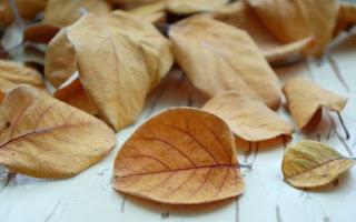 Ayva Yaprağının Faydaları