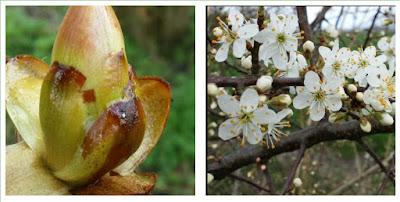 Een nieuwe lente, Spiegelgedachten, Spiegelruimte, Hillie Snoeijer, christelijk psycholoog Baflo, relatietherapie