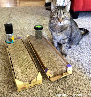 Cat and two catnip cardboard scratchers