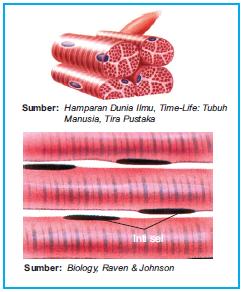 Wellshared Otot Lurik Otot Polos Otot Jantung