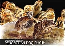Pengertian DOQ Puyuh atau Puyuh DOQ (Day Old Quail)