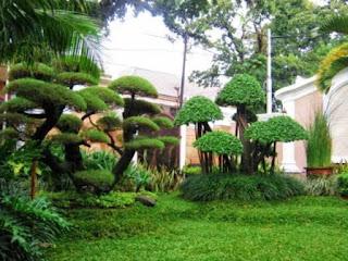Taman dengan bonsai yang mewah