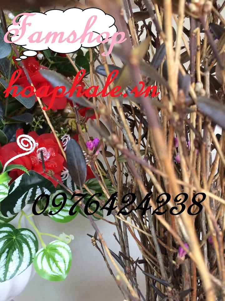 Hoa do quyen ngu dong tai Thuong Tin